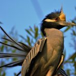 PODCAST: San Antonio's 'War on Birds' Keeps Expanding